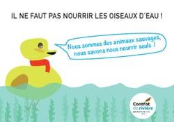 Il ne faut pas nourrir les oiseaux d'eau !