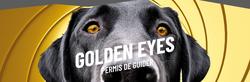 Les chiens guides, plus qu'un besoin