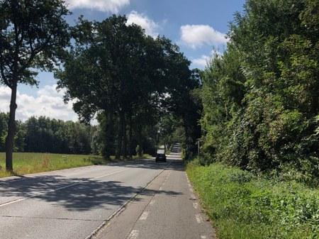 RN60 : Abattage d'arbres ces 19 et 20 août