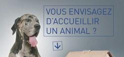 Vous envisagez d'accueillir un animal ?