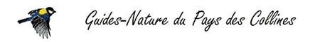 """Balade matinale : """"Aube des oiseaux"""""""