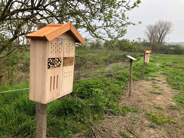 abeilles4.jpg