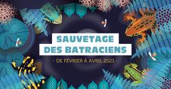 Des opérations de sauvetage de batraciens sur le territoire de Frasnes-lez-Anvaing ?