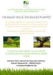 """Opération """"Un saule taillé, dix saules plantés"""" au Pays des Collines"""