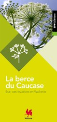 Plan wallon de lutte contre la Berce du Caucase