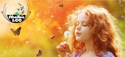 Découverte du «Parcours des abeilles sauvages»